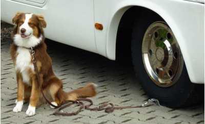 Aphiam Treadlock Dog Security Plate